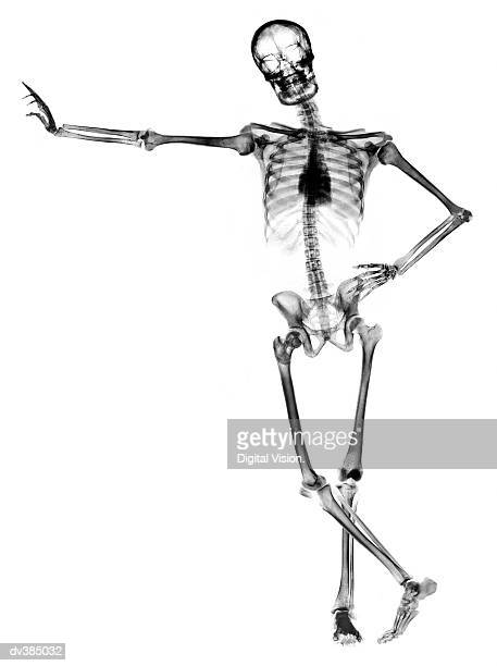 60 top human skeleton pictures  photos   u0026 images