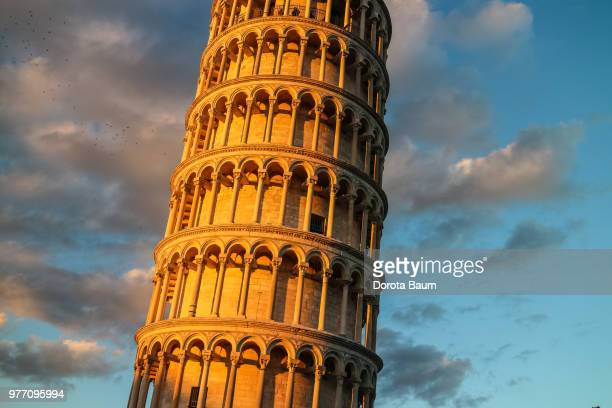 leaning tower - baum stock pictures, royalty-free photos & images