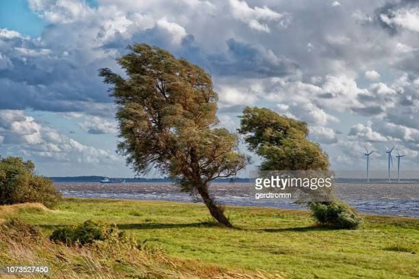 leaning trees near wind turbines, east frisia, lower saxony, germany - lower saxony stock pictures, royalty-free photos & images