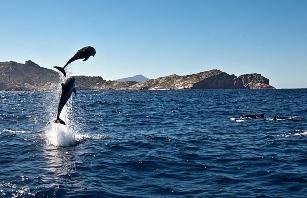 Leaping dolphins,  Freycinet Peninsula