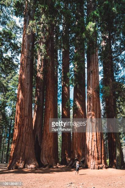 """""""learn character from trees, values from roots, and change from leaves."""" - sequoia national park - redwood tree stock photos and pictures"""