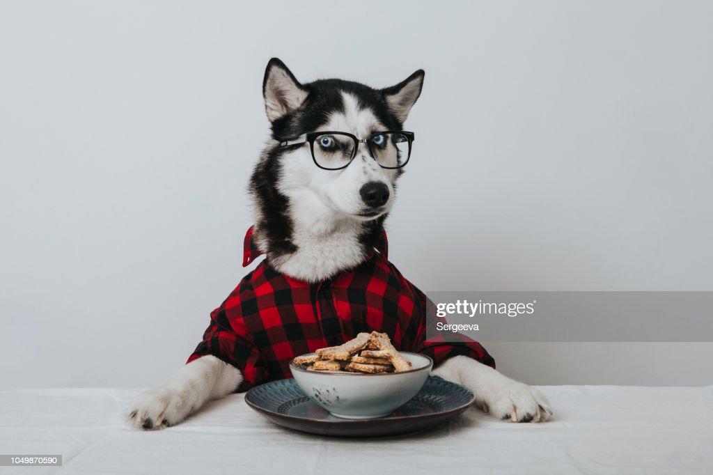 犬を学んだ : ストックフォト