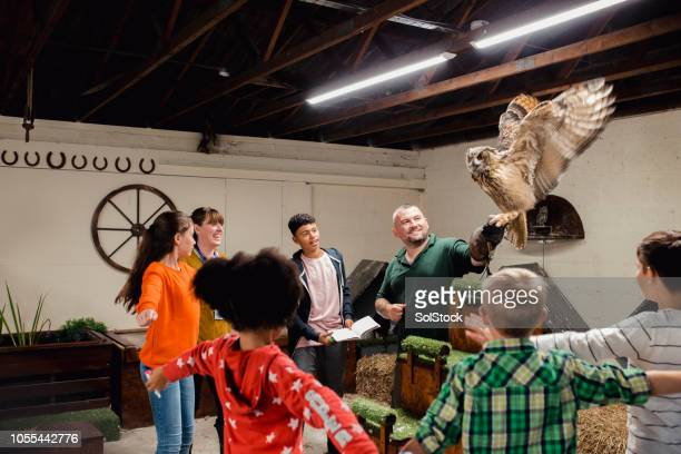 learning about different birds of prey - field trip stock pictures, royalty-free photos & images