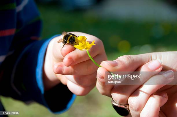 learning about nature - bumblebee stock pictures, royalty-free photos & images