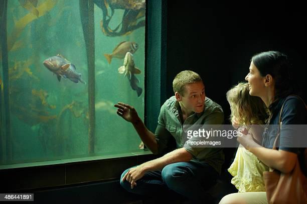 Découvrant des créatures de la mer