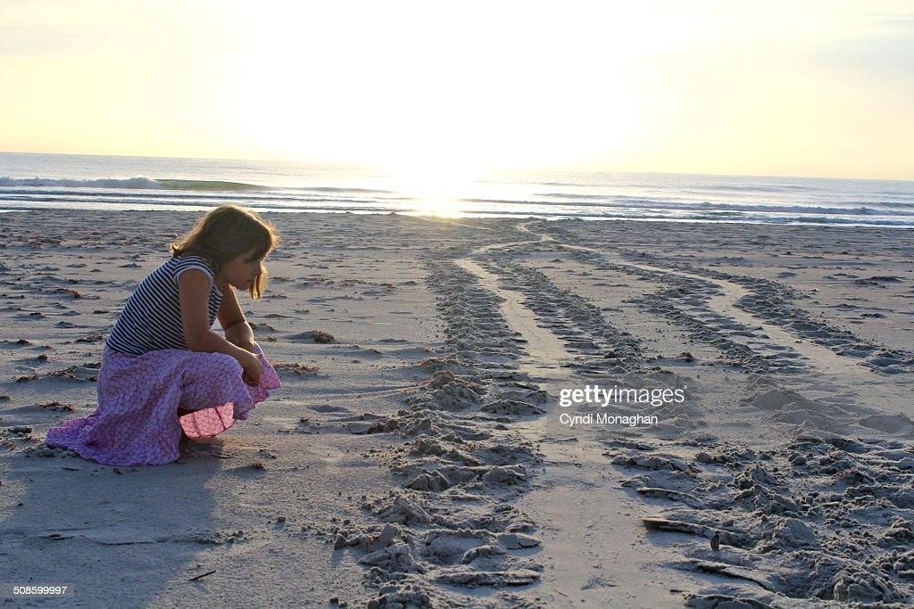 Learning about sea turtle nesting : Foto de stock