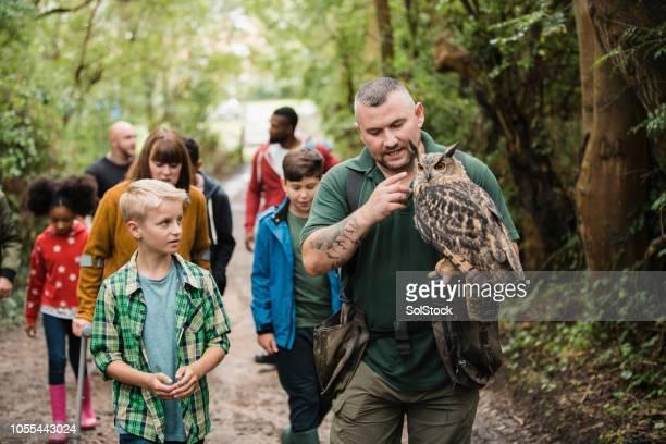 lernen über den uhu - raubvogel stock-fotos und bilder