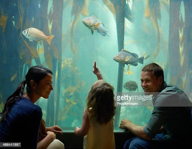 Apprentissage est sans limites à l'aquarium