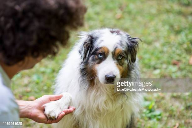 足を振る学習 - 動物芸 ストックフォトと画像