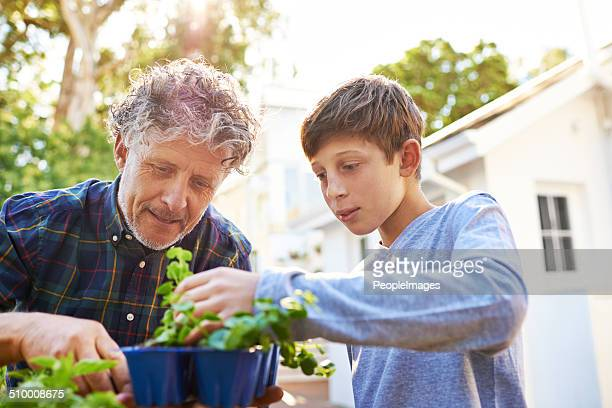 learning so much from grandad - green fingers stock pictures, royalty-free photos & images