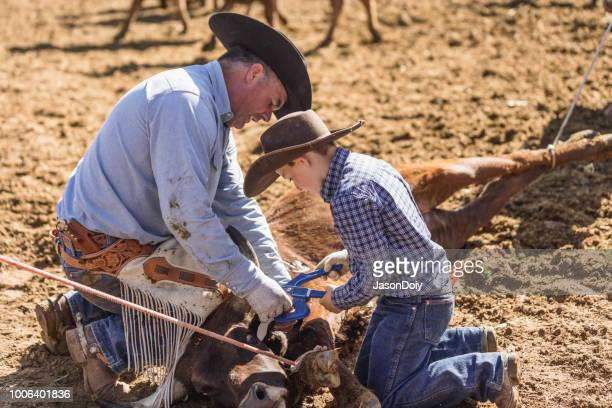 learning the ropes: young cowboy learns farm life on ranch - livestock branding stock photos and pictures