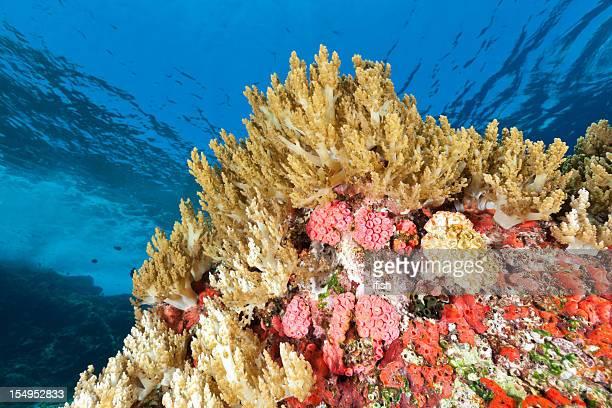 Cuero de colores Coral Reef, Crystal Rock, parque nacional de Komodo, Indonesia