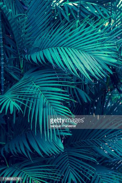 leaves abstract palm tropical leaves colorful flower on dark tropical foliage nature background dark blue foliage nature - hawaii islands stock pictures, royalty-free photos & images