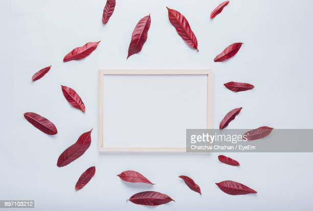 Leaves And Frame Against White Background