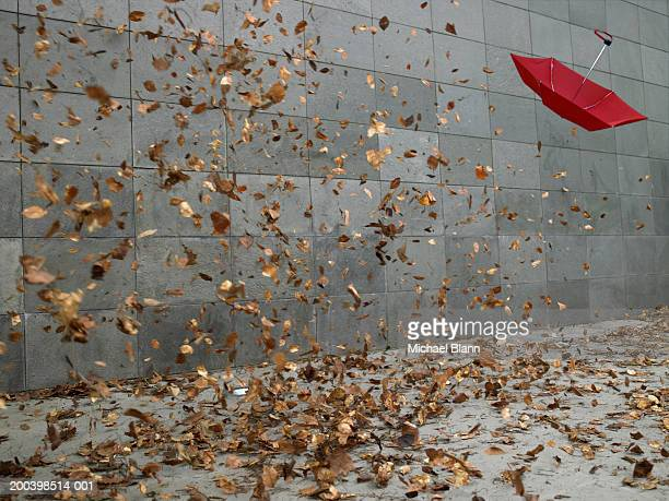 leaves and open umbrella blowing along pavement - vento foto e immagini stock