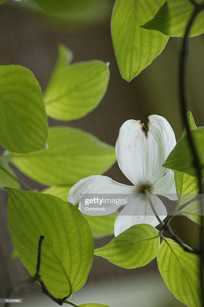 Leaves and white flower : Stockfoto