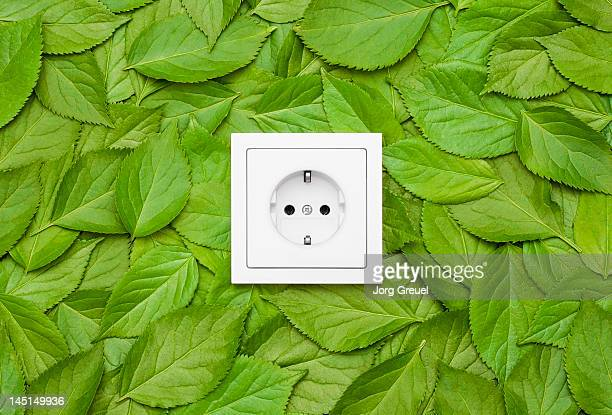leaves around an electrical outlet - tomada - fotografias e filmes do acervo