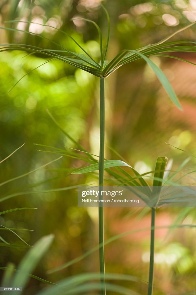 Leaves, Barbados, West Indies, Central America : Stock Photo