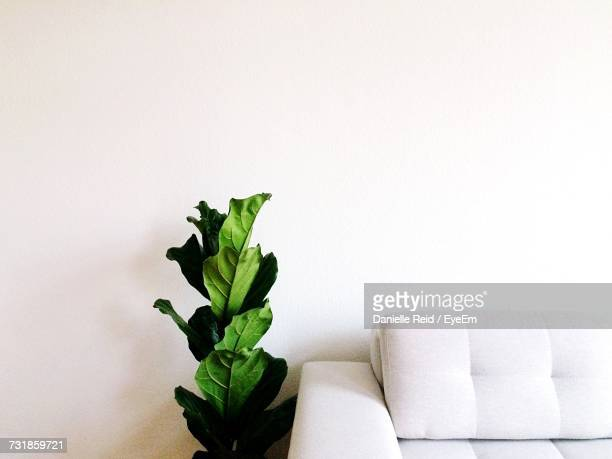 leaves by sofa against wall in living room at home - danielle reid stock pictures, royalty-free photos & images