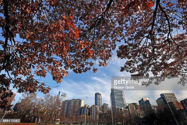 Leaves cling to a tree on the Boston Common on Dec 6 2017 This year balmy weather has scrambled the classic autumn script and some tree species...