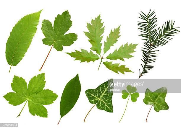 Blätter Kollektion
