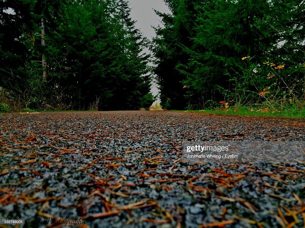 Leaves Covering Pathway : Foto stock