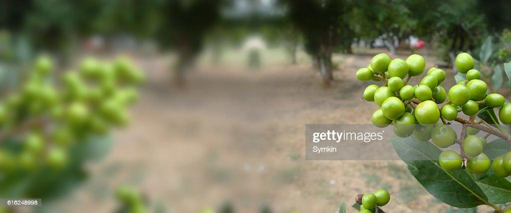 Leaves crop. Saturated color : Foto de stock