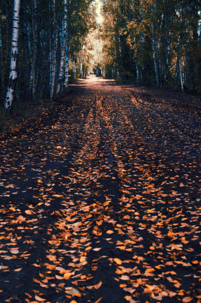 Leaves Fallen On Footpath During Autumn