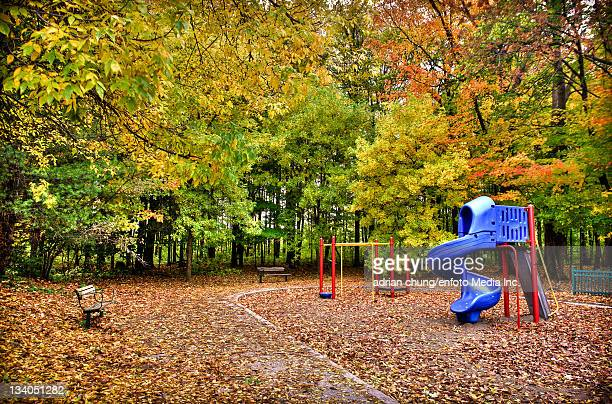 leaves falling in park - leisure equipment stock pictures, royalty-free photos & images