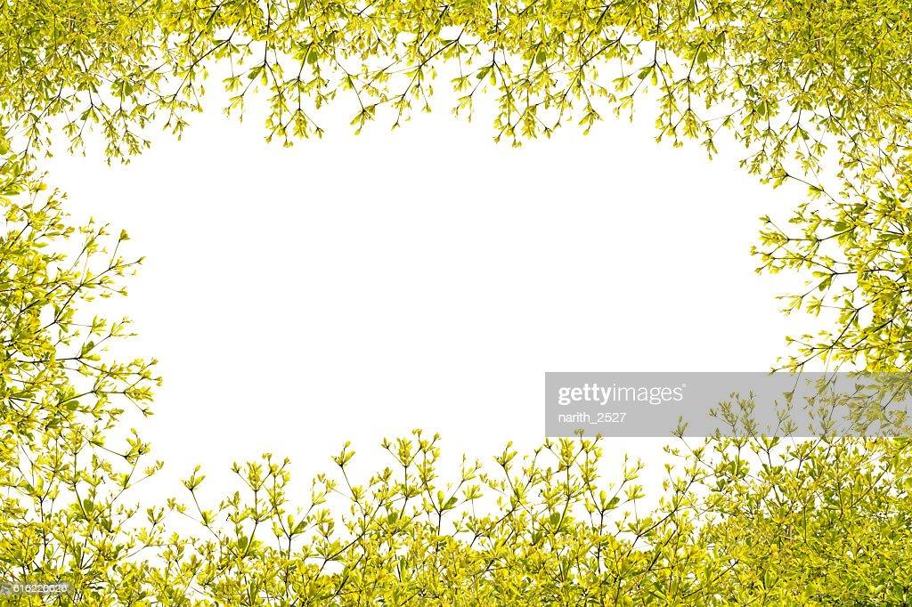 leaves frame on white background : Stock Photo