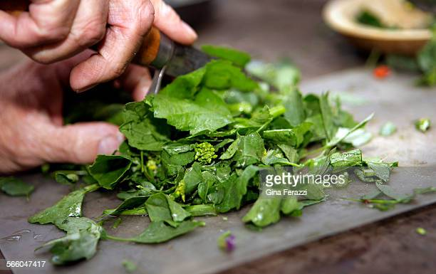 Leaves from a common mustard plants wild radishes and lambs quarters are chopped to make a fresh salad from wild food found in Hahamongna Watershed...