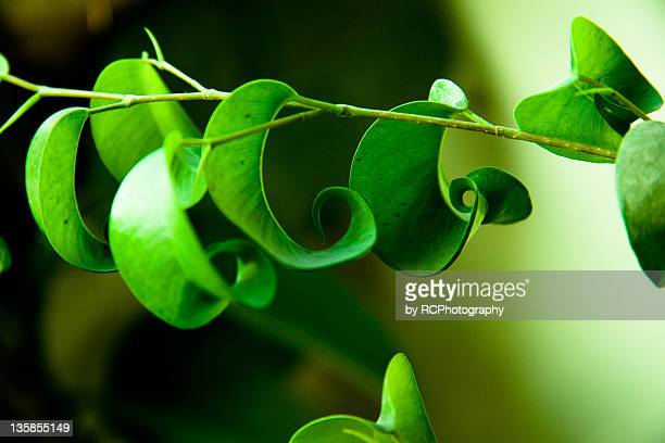 Leaves hanging of branch