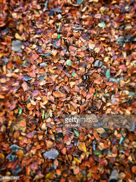 leaves in blarney - rob castro stock pictures, royalty-free photos & images
