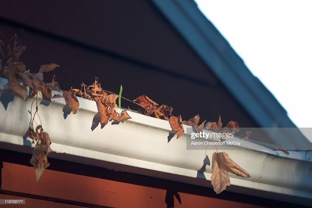 Leaves in gutter : Stock Photo