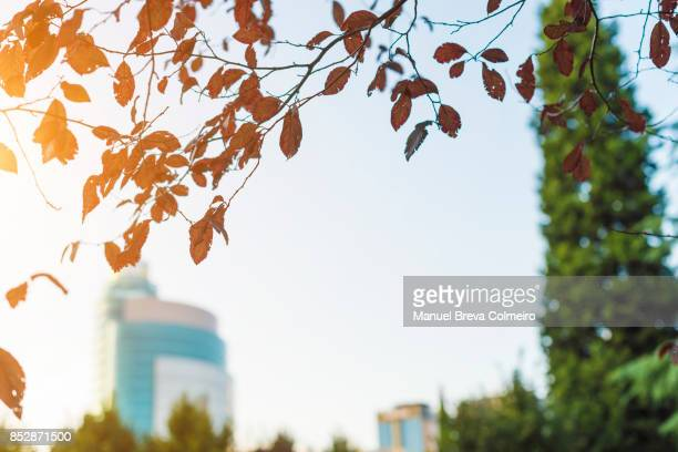 Leaves in the city