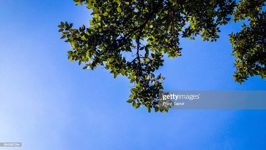 Leaves In The Sky : Stock Photo