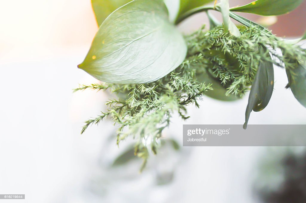 leaves in the vase : Stockfoto