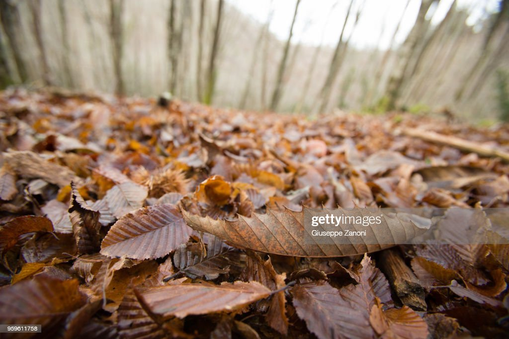 Leaves in the woods : Stock-Foto
