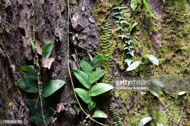 leaves, moss on wood in zen-like tropical patterns, borneo, malaysia - argenberg stock pictures, royalty-free photos & images