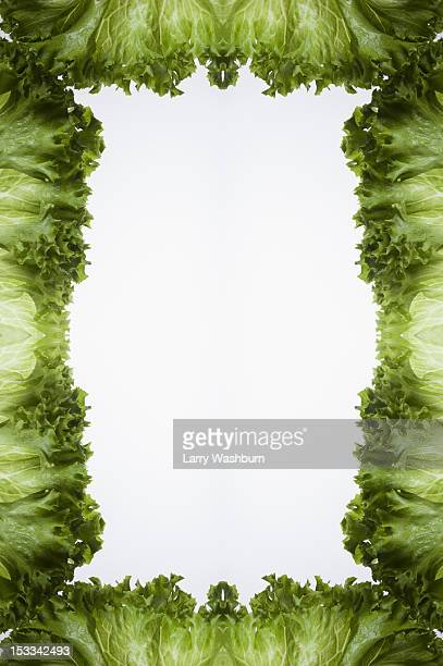 Leaves of green leaf lettuce arranged into a frame on a light box