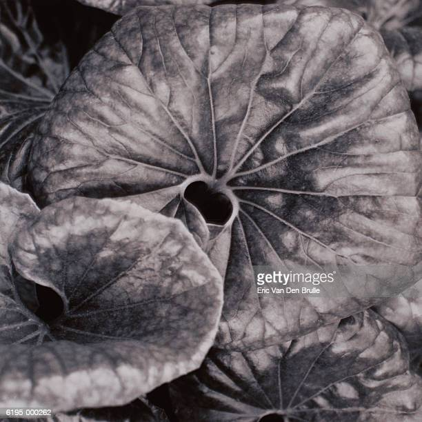 leaves of plant - eric van den brulle - fotografias e filmes do acervo