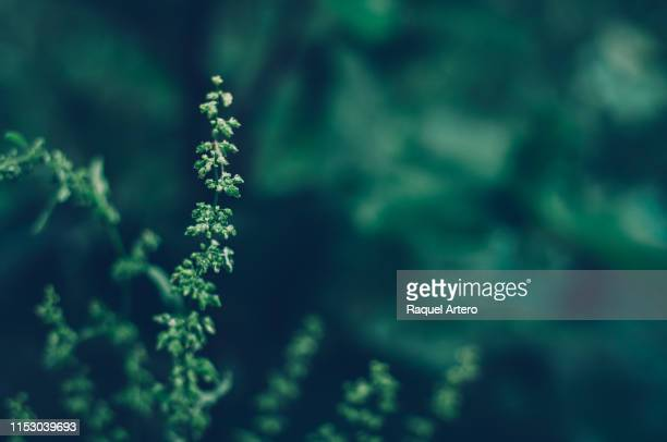leaves of the forest - naturaleza fotografías e imágenes de stock