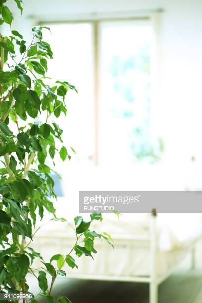 Leaves on background in bedroom