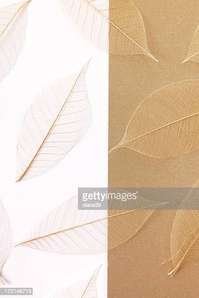 leaves on paper