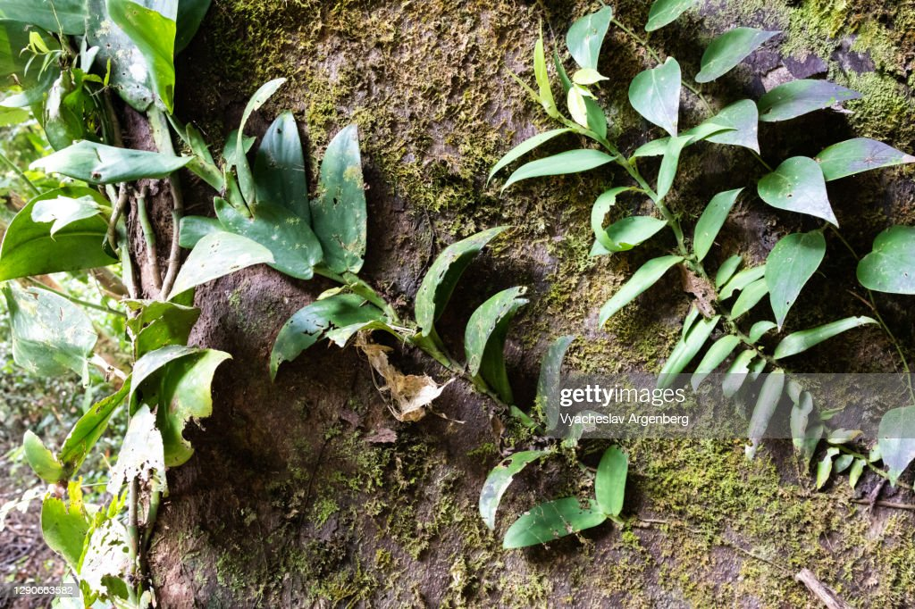 Leaves on wood in zen-like tropical patterns, Borneo, Malaysia : Stock Photo