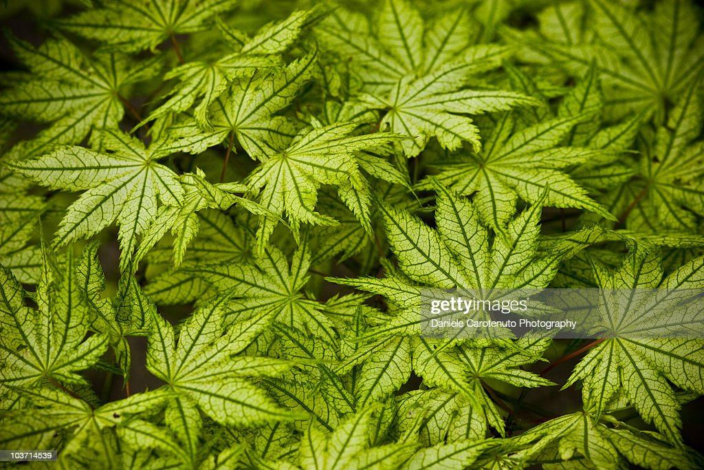 Leaves : Stock Photo