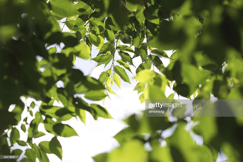 Blätter : Stock-Foto
