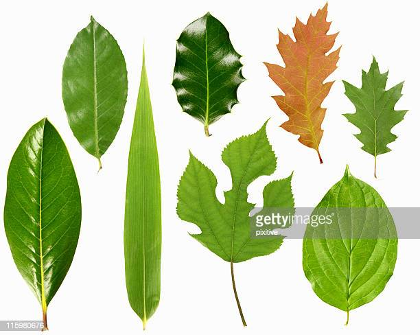 Leaves selection