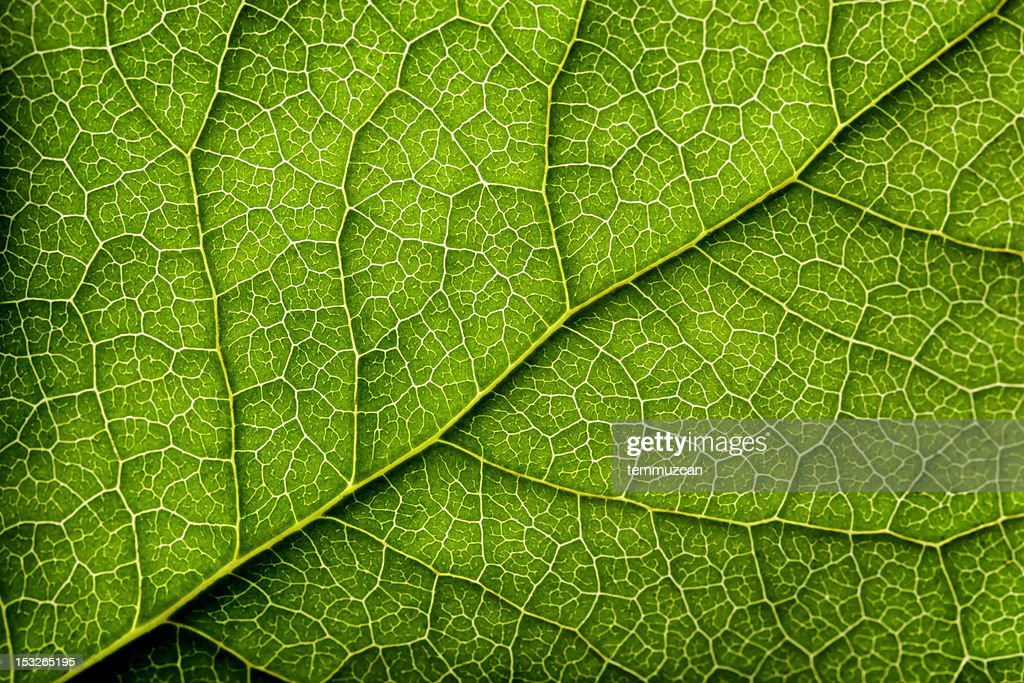 Leaves Series : Stock Photo
