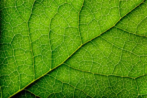 Leaves Series 153265195
